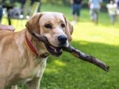 Toledo no permitirá a los vecinos pasear animales a más de 300 metros de su casa
